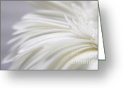 Daisies Photos Greeting Cards - Desire Greeting Card by Kristin Kreet