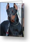 Dobermann Greeting Cards - Doberman Pinscher  Greeting Card by Amir Paz