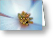 Dogwood Lake Greeting Cards - Dogwood Close-up - 2 Greeting Card by Randy Muir