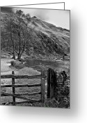 English Countryside Print Greeting Cards - Dovedale Stepping Stones Greeting Card by Darren Burroughs