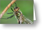 Colours Greeting Cards - Dragonfly Greeting Card by Gert Lavsen