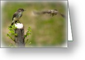 Wildlife Photo Greeting Cards - Eastern Phoebe Greeting Card by Bob Orsillo