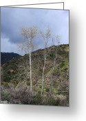 Trees Photograph Greeting Cards - Eaton Canyon Greeting Card by Viktor Savchenko