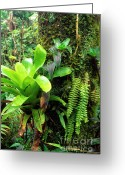 Bromeliad Greeting Cards - El Yunque National Forest Greeting Card by Thomas R Fletcher