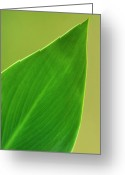 Palm Leaf Greeting Cards - Elegance Greeting Card by Jeffrey Campbell