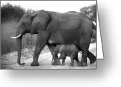 Day Photo Greeting Cards - Elephant Walk Black and White  Greeting Card by Joseph G Holland
