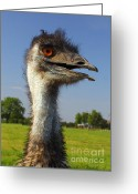 Eatable Greeting Cards - Emu Greeting Card by Robert Frederick