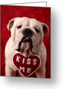 Sad Greeting Cards - English Bulldog Greeting Card by Garry Gay