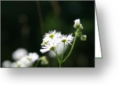 Wildflower Photos Greeting Cards - Enlightened  Greeting Card by Neal  Eslinger