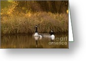 Wild Goose Greeting Cards - Evening By The Pond Greeting Card by Angel  Tarantella