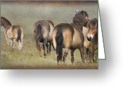 West Country Greeting Cards - Exmoor Ponies Greeting Card by Ethiriel  Photography