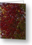 Red Leaves Greeting Cards - Fall 2010 10 Greeting Card by Robert Ullmann
