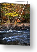 Bank Photo Greeting Cards - Fall forest and river landscape Greeting Card by Elena Elisseeva