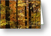 Natural Beauty Greeting Cards - Fall forest Greeting Card by Elena Elisseeva