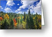 Sparkling Greeting Cards - Fall forest in sunshine Greeting Card by Elena Elisseeva