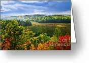 Colors Greeting Cards - Fall forest rain storm Greeting Card by Elena Elisseeva