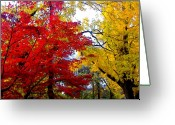 Nature Landscape Greeting Cards - Fall Leaves Greeting Card by Ariane Moshayedi