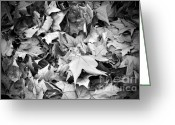 Fall Leaves Photo Greeting Cards - Fallen leaves Greeting Card by Fabrizio Troiani