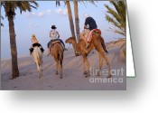 12-13 Years Greeting Cards - Family riding three camels in desert Greeting Card by Sami Sarkis
