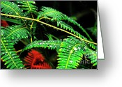 Puerto Rico Greeting Cards - Ferns and Raindrops Greeting Card by Thomas R Fletcher