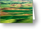 Wheatfields Photo Greeting Cards - Field of Green Greeting Card by Eggers   Photography