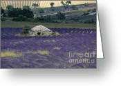 Flovers Greeting Cards - Field of lavender. Sault Greeting Card by Bernard Jaubert