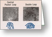 Whorl Greeting Cards - Fingerprint Patterns Greeting Card by Photo Researchers