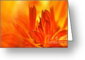 Botanicals Mixed Media Greeting Cards - Fire Storm  Greeting Card by Elaine Manley