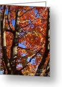 Chevalier Greeting Cards - Flaming Tree Greeting Card by Elizabeth Chevalier