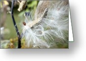 Pods Greeting Cards - Flight of the Milkweed Greeting Card by Lauren Radke