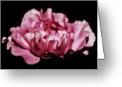 Pink Carnations Greeting Cards - Floating Greeting Card by Cathie Tyler