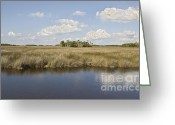 Cabbage Palm Trees Greeting Cards - Florida Salt Marsh Greeting Card by John Arnaldi