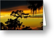 Pine Tree Greeting Cards - Florida sunset Greeting Card by David Lee Thompson