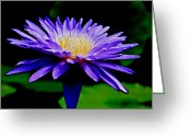 Water Lilly Greeting Cards - Flower Art Greeting Card by Steve McKinzie