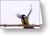 Eat Free Greeting Cards - Fly tit Greeting Card by Odon Czintos