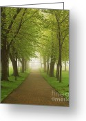 Alley Greeting Cards - Foggy park Greeting Card by Elena Elisseeva