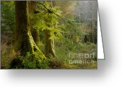 Natures Beauty Greeting Cards - Forest Glow Greeting Card by Idaho Scenic Images Linda Lantzy
