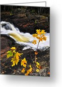 Bank Photo Greeting Cards - Forest river in the fall Greeting Card by Elena Elisseeva