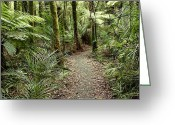 Rain Forest Greeting Cards - Forest trail Greeting Card by Les Cunliffe