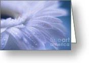 Daisies Photos Greeting Cards - Fragile Greeting Card by Kristin Kreet