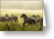 Running Horse Greeting Cards - Freedom Greeting Card by Ron  McGinnis