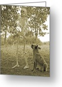 Mutt Greeting Cards - Friends Greeting Card by East Coast Barrier Islands Betsy A Cutler