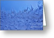 Virginia Winter Greeting Cards - Frost on a Windowpane Greeting Card by Thomas R Fletcher