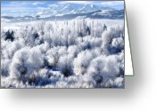 Forested Greeting Cards - Frosted Trees in Ogden Valley Utah Greeting Card by Utah Images