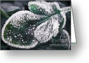 Freeze Greeting Cards - Frosty leaf Greeting Card by Elena Elisseeva