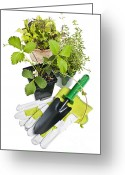 Gloves Greeting Cards - Gardening tools and plants Greeting Card by Elena Elisseeva