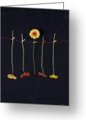 Clothesline Greeting Cards - Gerbera Greeting Card by Joana Kruse
