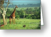 African Giraffes Greeting Cards - Giraffe Greeting Card by Sebastian Musial