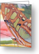 Designers Choice Photo Greeting Cards - Golden Butterfly Greeting Card by Don  Wright
