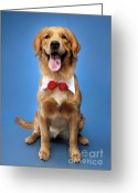 Yellow Dog Greeting Cards - Golden Retriever Greeting Card by Oleksiy Maksymenko